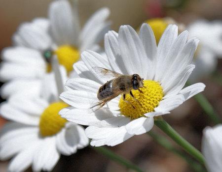 Co robić gdy ukąsi Cię owad?