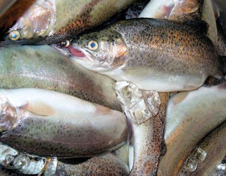 Jak kupić świeżą rybę w sklepie?
