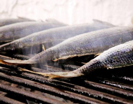 Jaka marynata do ryb z grilla?