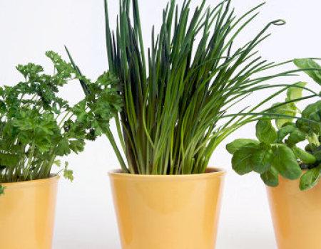 Jakie zioła warto hodować w domu?