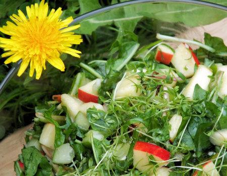 Wiosenna sałatka z liści mniszka lekarskiego