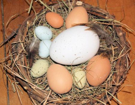 Wokół wielkanocnego jajka