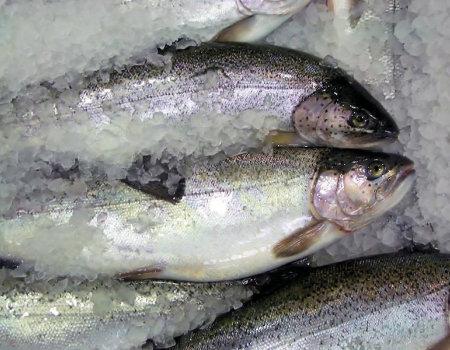 Aby ryby zachowały jędrność po ugotowaniu...