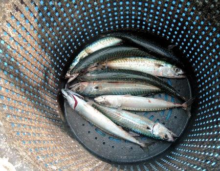 Ryby nie wolno gotować na dużym ogniu...