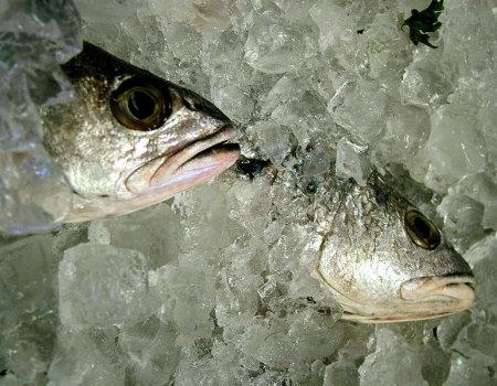 Świeżą rybę łatwiej oczyścimy z łusek, jeśli...