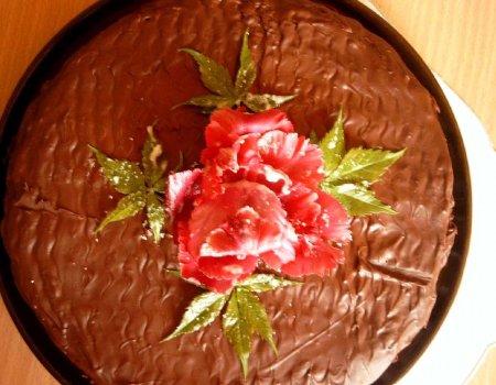 Tort Niby-sękacz