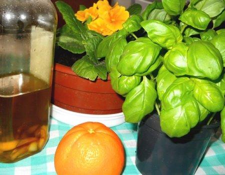 Oliwa z oliwek czosnkowa