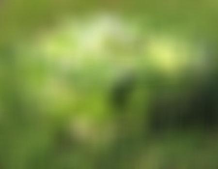 Sałata zielona