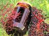 Sok z owoc�w czarnego bzu