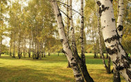Sok z brzozy na wiosenne wzmocnienie