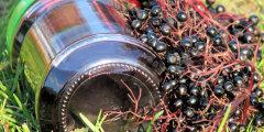 Sok miodowy z owocami czarnego bzu