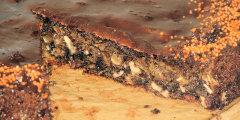 Ciasto orzechowo-kawowe z płatkami kukurydzianymi